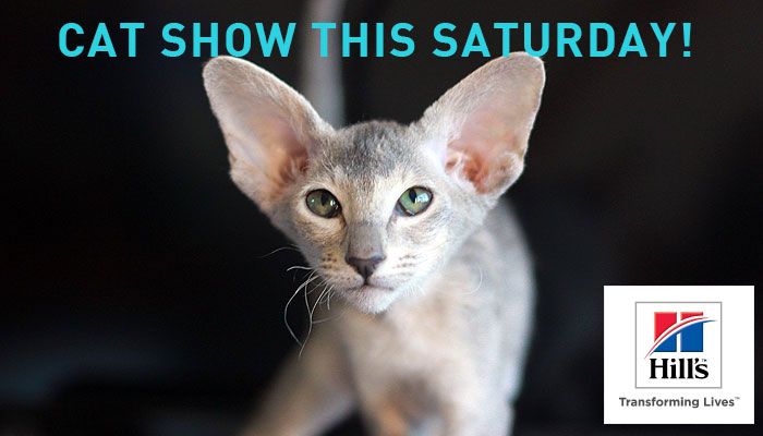 Visit us on Saturday at the KZNCC Double Cat Show in Hillcrest