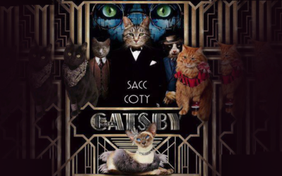 We have qualified for SACC Cat of the Year 2017