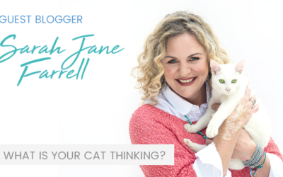 Feline Behaviour – Trust your gut with Sarah-Jane Farrell