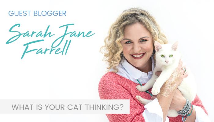 Feline Behaviour – Trust your gut with Sarah-Jane Farrell