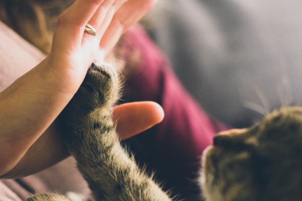 Coronavirus and your Cat